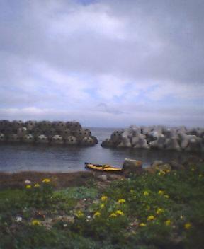 礼文島に到着