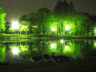 Pic_20080422